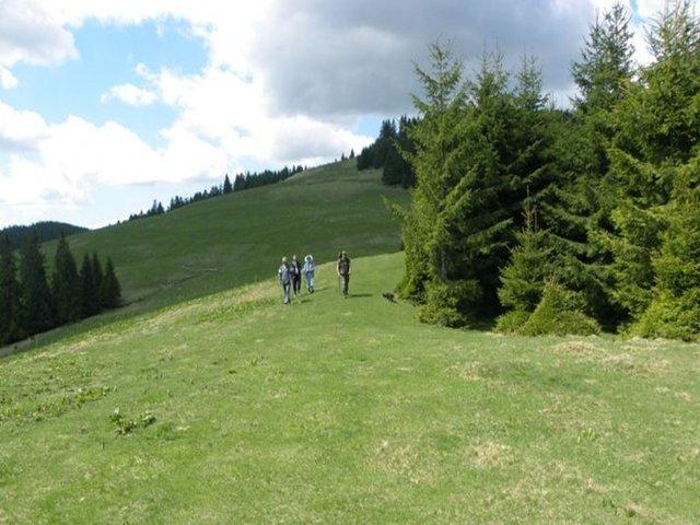 Vârful Cotului - 1557 m - Tarcăului