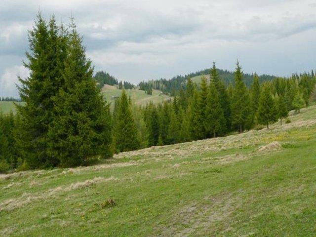 Vârful Locul lui Mihai - 1466 m - Tarcăului