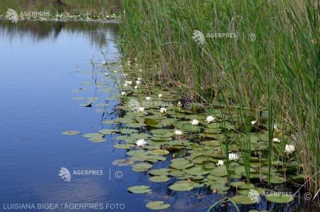Tulcea: Demersuri pentru decolmatarea unor canale din Deltă, iniţiate de autorităţi