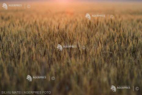 Perspectivele s-au înrăutăţit pentru principalii exportatori de grâu europeni, inclusiv pentru România