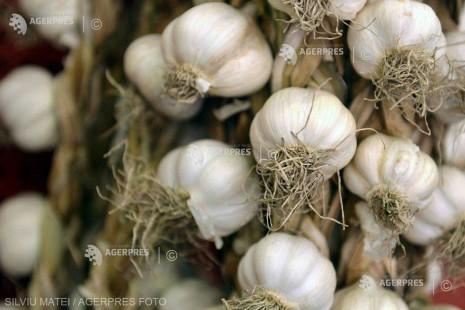 Buzău: Ajutor financiar de 1.000 de euro la hectar pentru aproape 40 de producători de usturoi