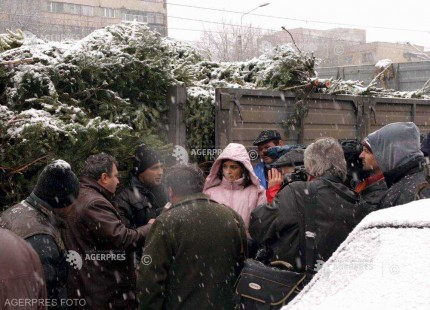 IGPR: Peste 9.000 de pomi de Crăciun au fost confiscaţi