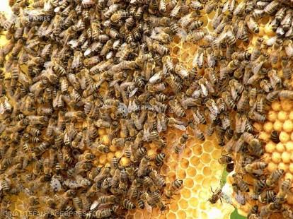Ziua mondială a albinelor