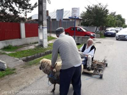 Vrancea: 'Tăranul sărac' - la vot cu 'bici-grapa' pe care o va dona europarlamentarilor pentru a deplasa mai uşor în ţară