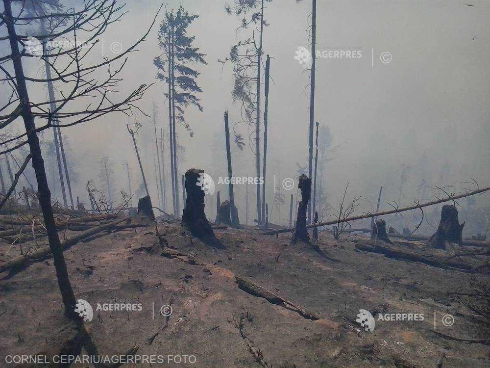Vâlcea: Incendiile de pădure din Malaia şi Brezoi au fost lichidate