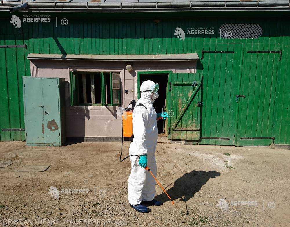 ANSVSA: 998 de focare de pestă porcină africană pe teritoriul României