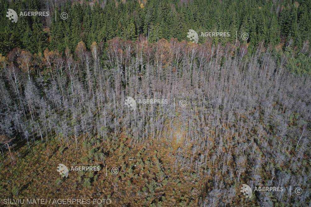 RETROSPECTIVĂ 2018/Ministerul Apelor şi Pădurilor - investiţii în modernizări hidrotehnice, perdele forestiere şi zona costieră
