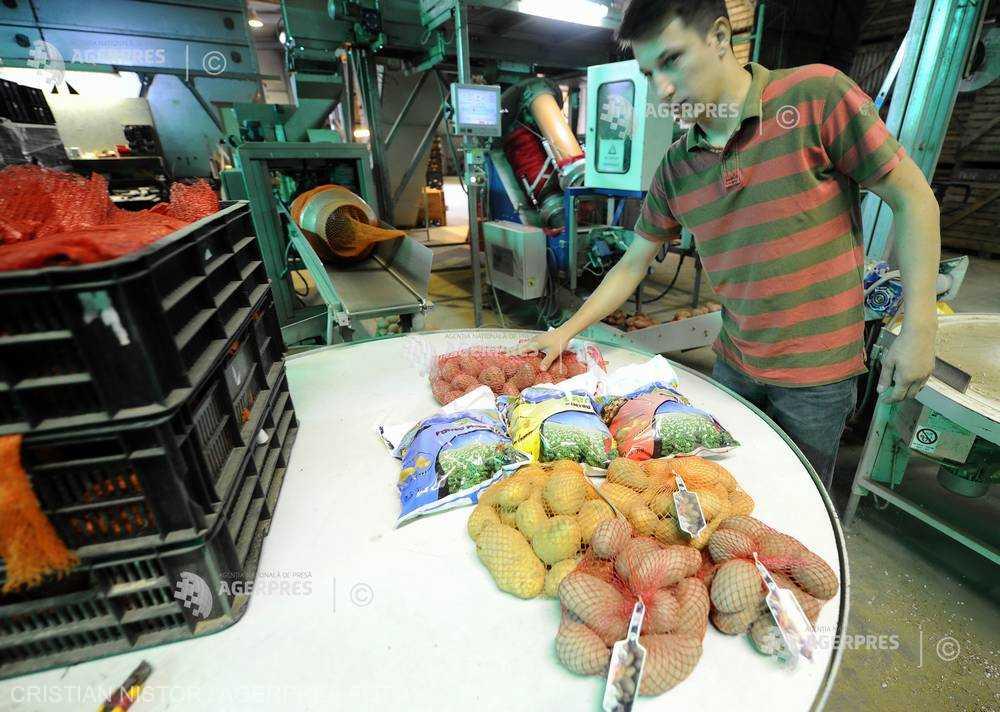 Preţul cartofilor a crescut cu peste 10% în ianuarie; mierea de albine şi fasolea boabe s-au ieftinit