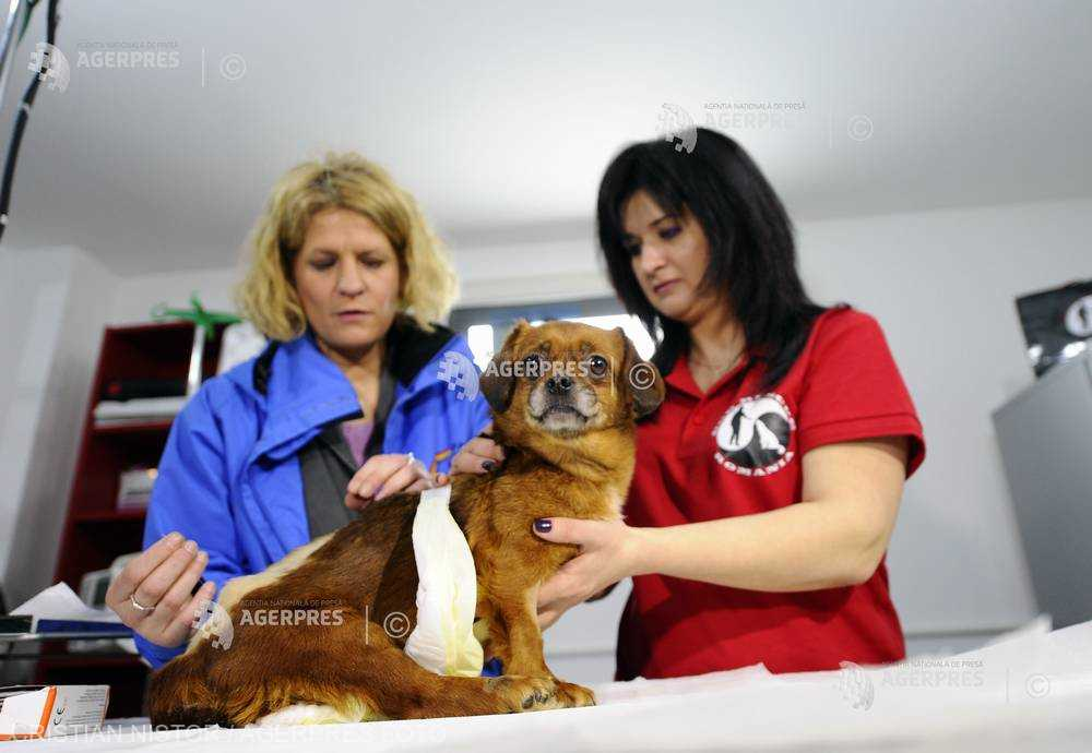 Ziua naţională a medicului veterinar