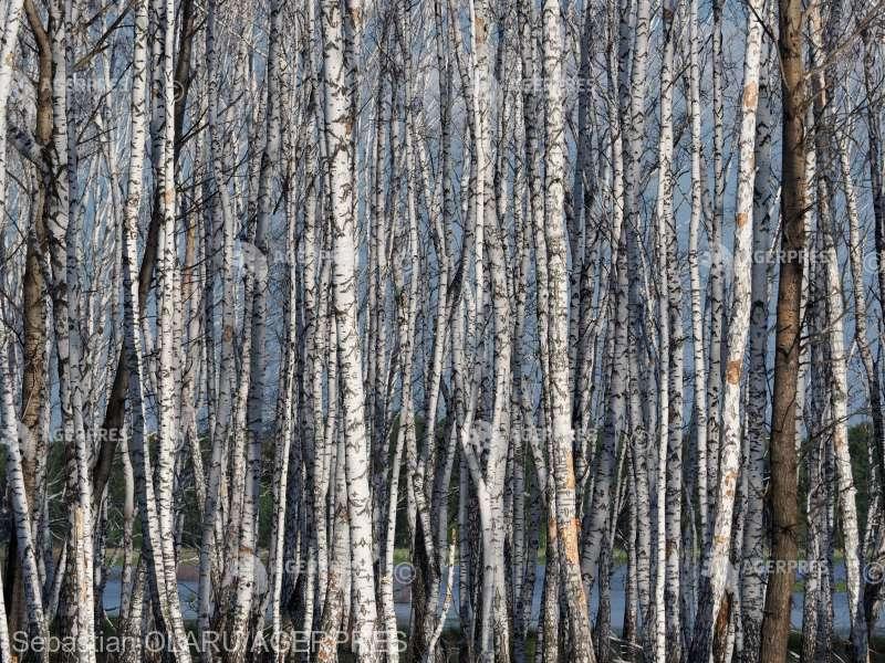Modificări ale pădurii boreale date de schimbările climatice, identificate în cadrul expediţiei din Rusia