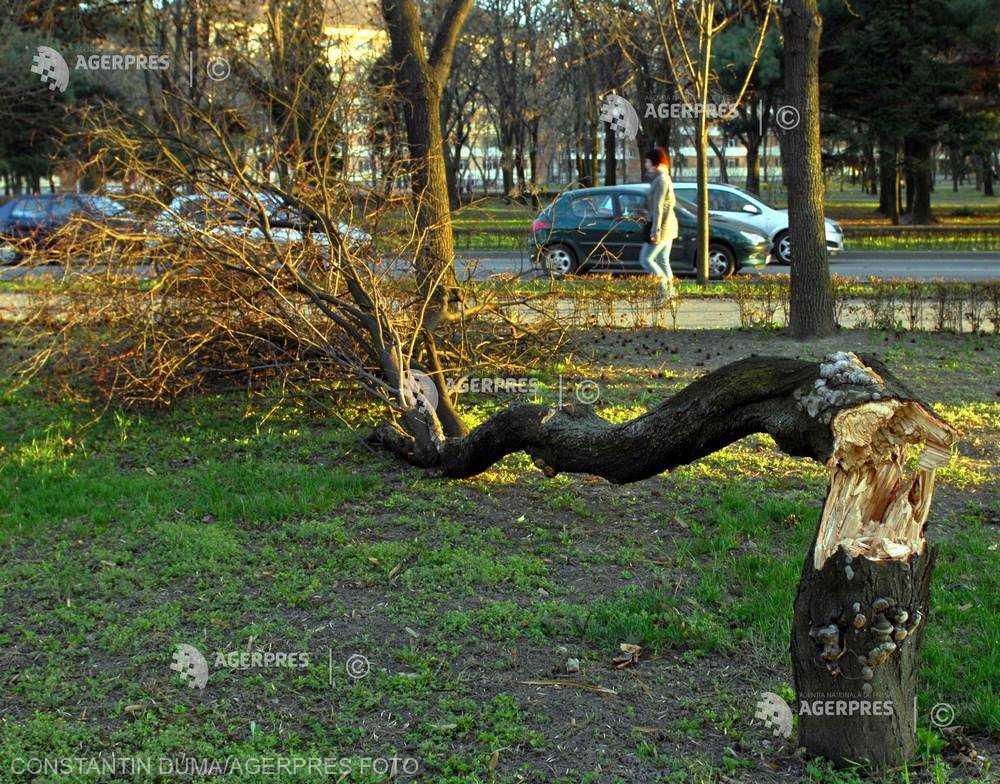Cod galben de vânt puternic în localităţi din judeţele Sibiu, Caraş-Severin şi Timiş