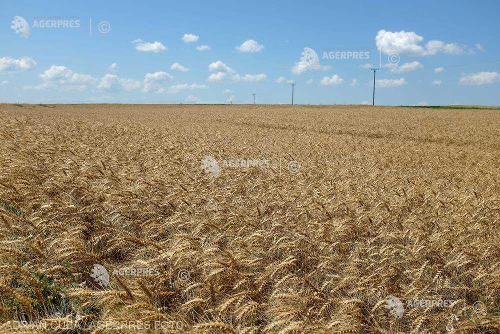 MADR: Fermierii au cerut garanţii de aproape 34 de milioane de lei pentru cumpărarea de terenuri agricole, în primele 7 luni