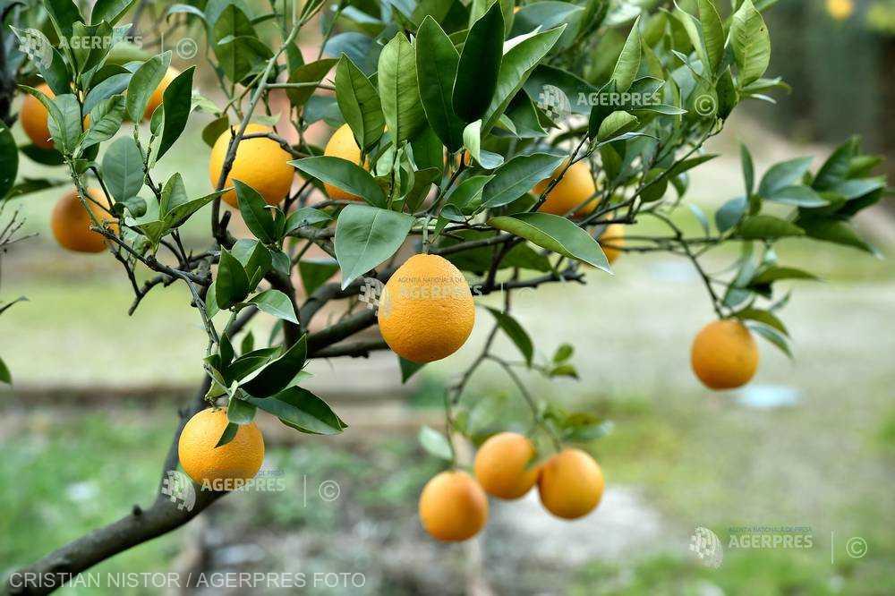 Consumul unei portocale pe zi scade cu 60% riscul de degenerescenţă maculară (studiu)