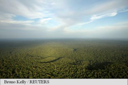 Arborii cultivați de vechii locuitori din zona Amazonului au contribuit la abundența pădurilor de astăzi (studiu)