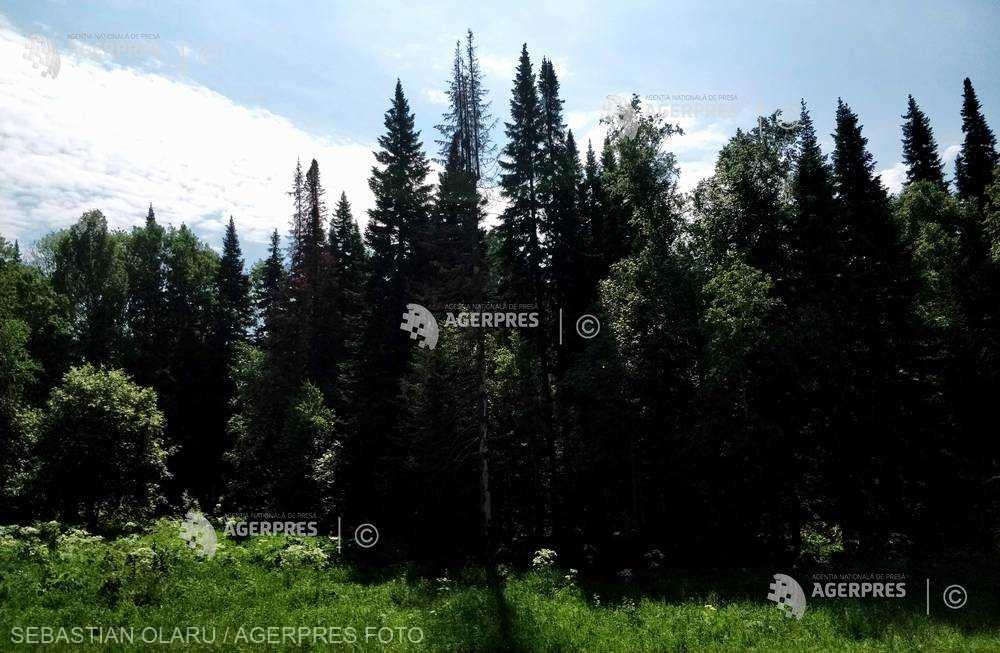 Romsilva obţine certificare internaţională pentru 127.493 ha de pădure; suprafaţa totală certificată - 2,47 milioane de hectare