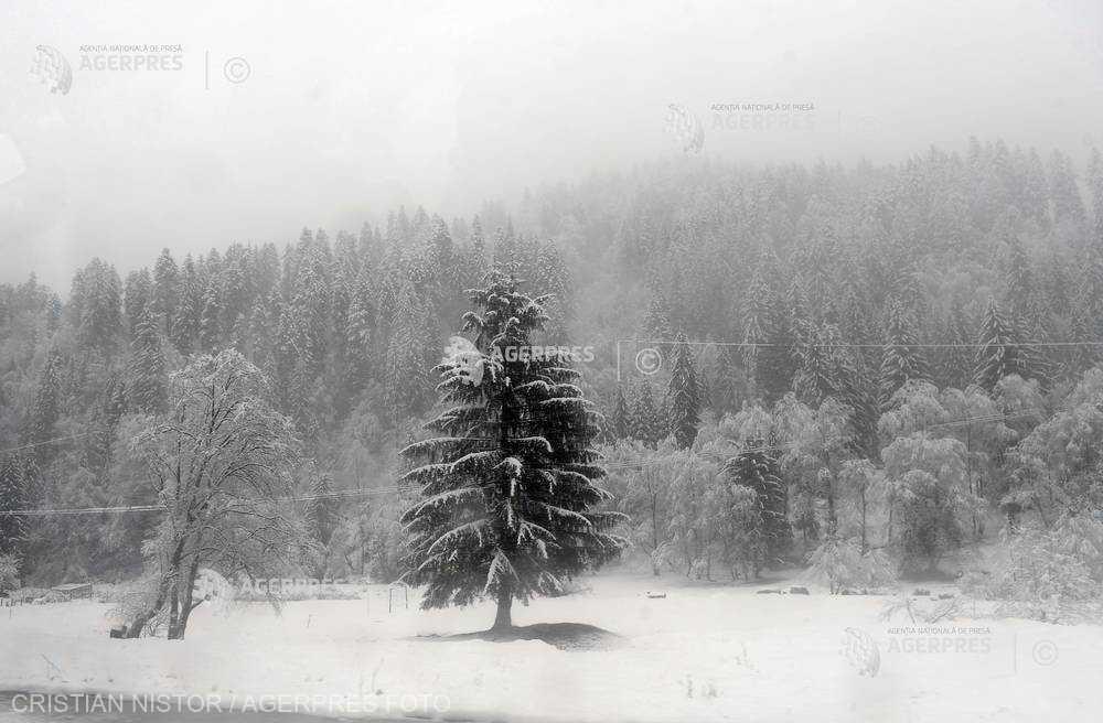 Cod portocaliu de ninsori şi viscol în zone montane din Transilvania şi Banat, marţi dimineaţă