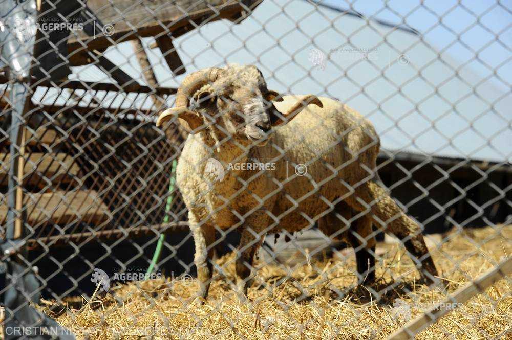 INS: România a exportat animale vii în valoare de 74,1 de milioane euro, în primul trimestru din acest an