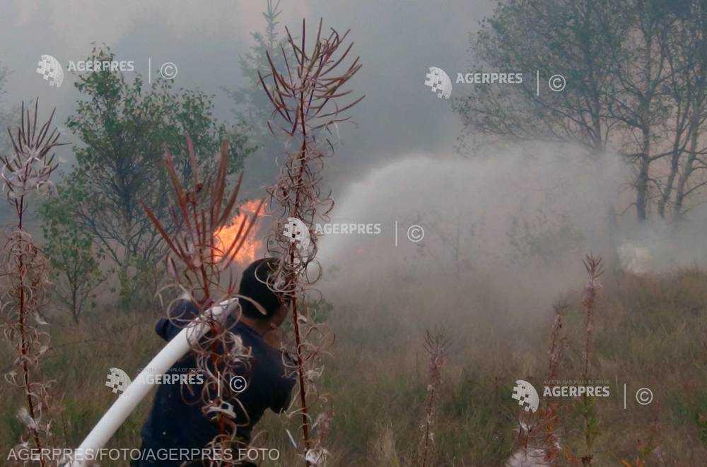 Prahova: Incendiu de vegetaţie uscată, extins la litiera pădurii în comuna Apostolache