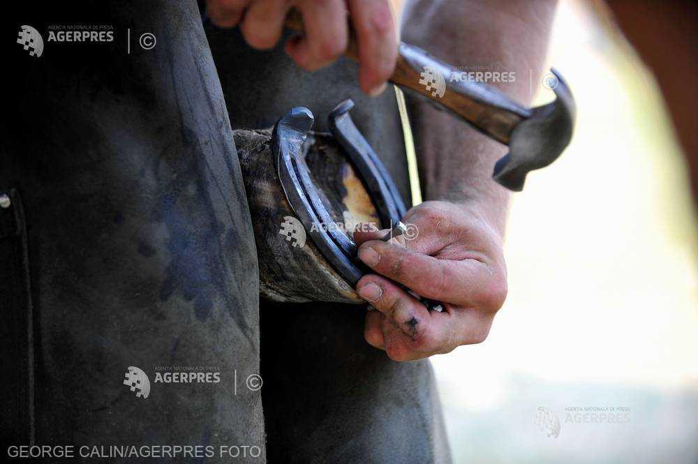 Cluj: USAMV îi specializează pe studenţi în tainele potcovirii cailor, o meserie pe cale de dispariţie în ţara noastră