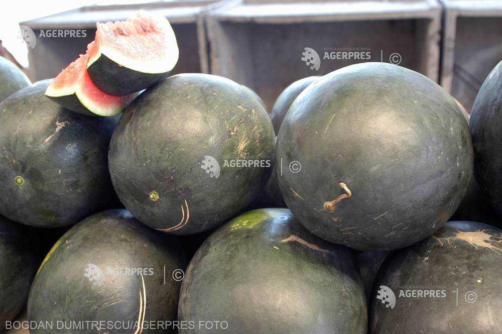 Dolj: Pepenii de Dăbuleni se vând en-gross cu 30 bani/kilogramul, preţ care, conform producătorilor, nu acoperă cheltuielile