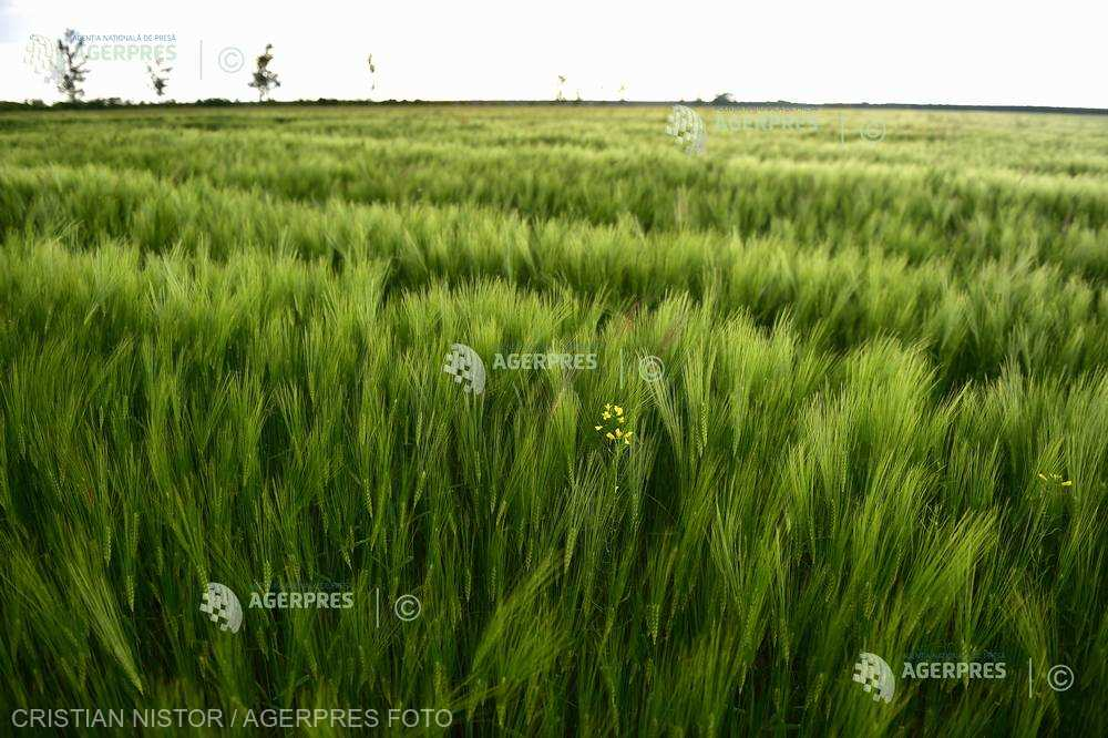 Ritmuri intense de creştere şi dezvoltare ale culturilor agricole, în zonele de câmpie (agrometeo)