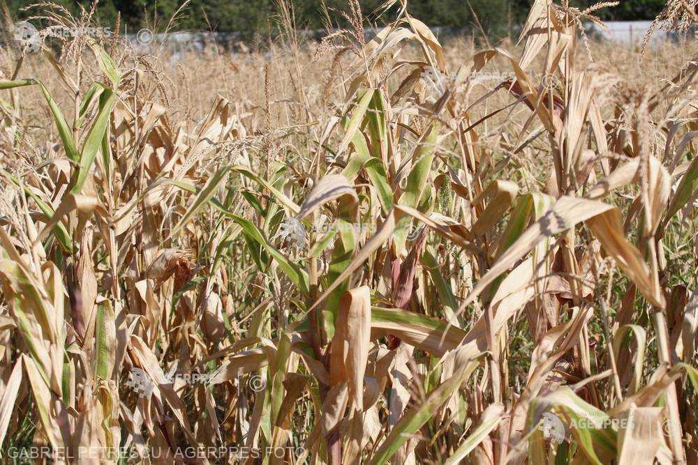 Agrometeo: Starea de vegetaţie a culturilor agricole va fi medie şi slabă pe terenurile cu deficite de apă, până pe 4 septembrie