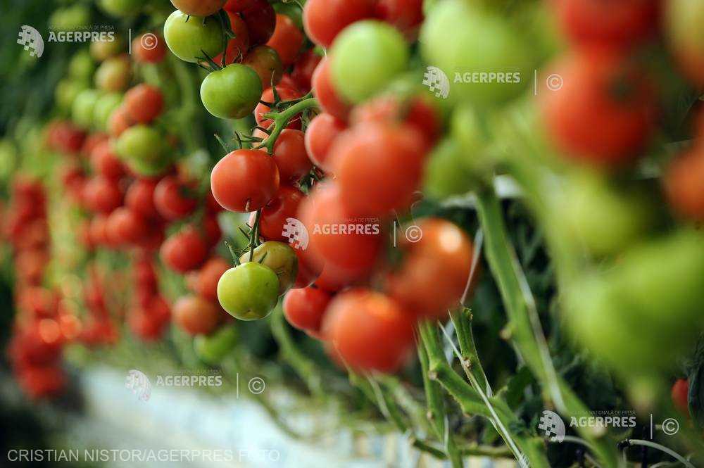 Olt: Peste 600 de fermieri înscrişi în programul ''Tomate'' au vândut deja câte două tone de produse