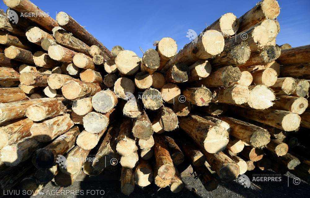INS: Exporturile de lemn şi plută au scăzut, în primele patru luni, cu 8,6%