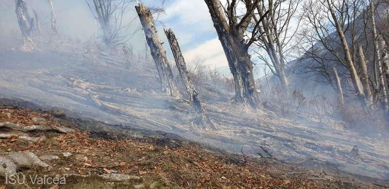 Vâlcea: Incendiu violent într-o pădure din comuna Malaia; focul a cuprins peste 3 hectare de litieră