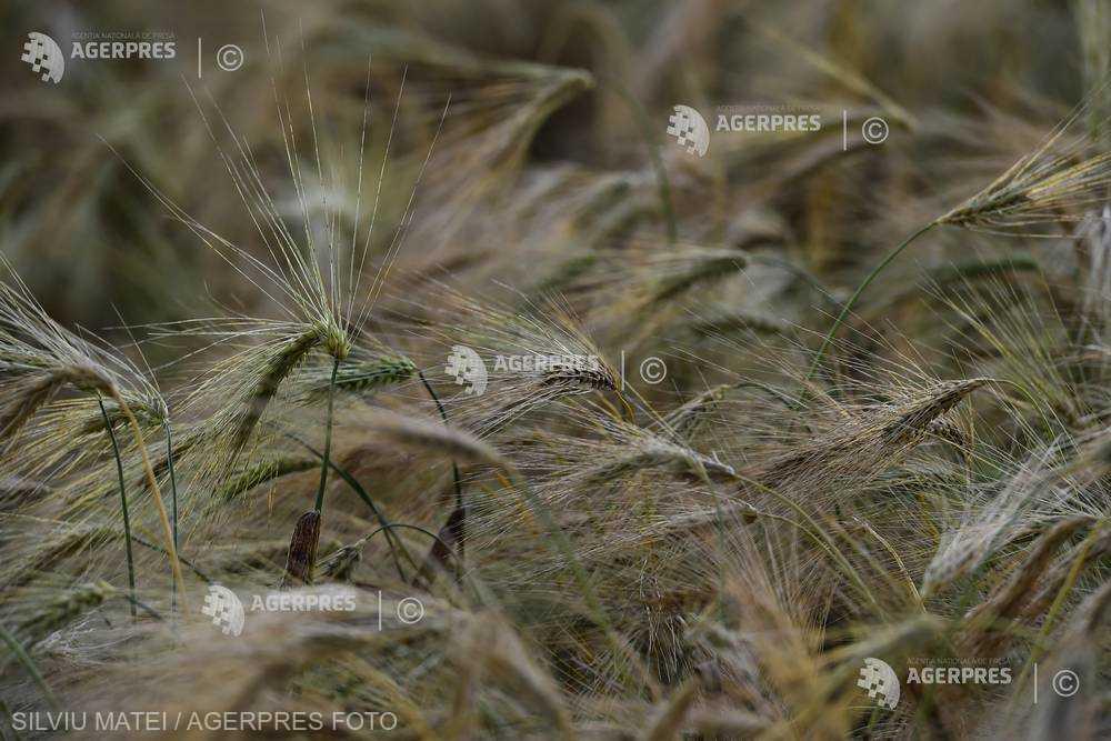 Excedent de 135 milioane euro în comerţul internaţional cu cereale, în ianuarie 2019 (INS)