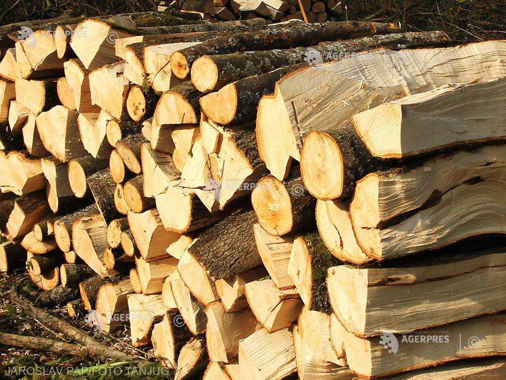 România a exportat lemn şi plută în valoare de peste 482 milioane de euro, în primele 10 luni din 2017