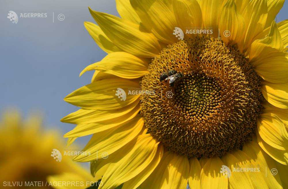 Vremea capricioasă din acest an reduce producţia de miere cu circa 30%