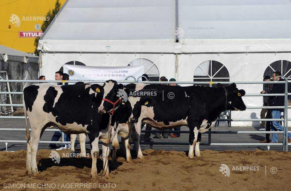 WEF: renunţarea la carnea de vită ar putea salva milioane de vieţi