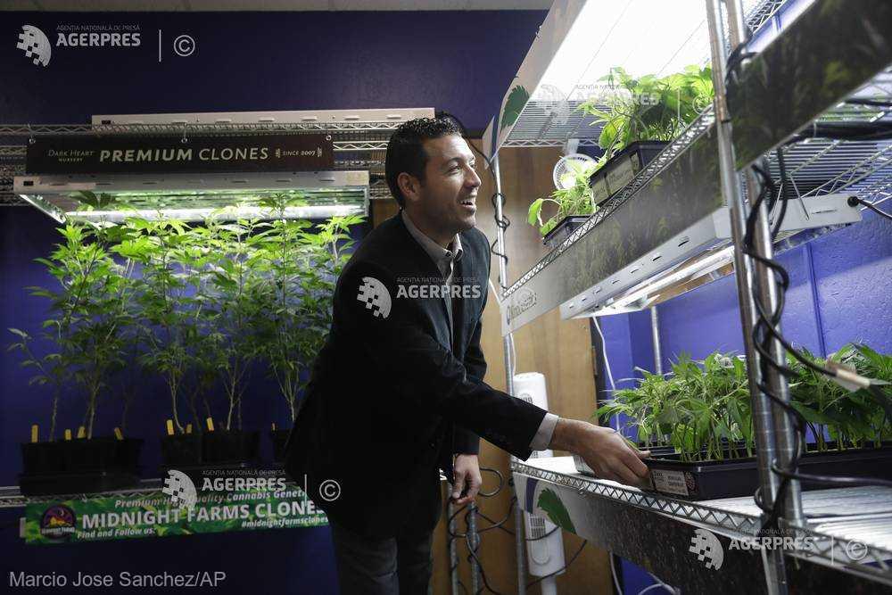 Marijuana în scop recreaţional, legală de la 1 ianuarie în California