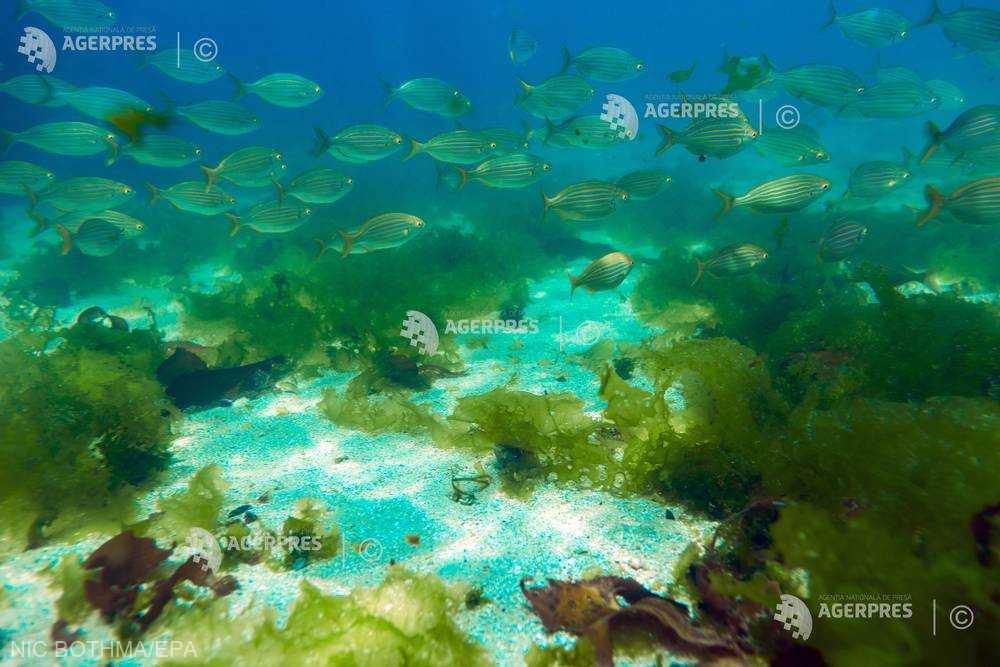 Temperaturile oceanelor cresc mai repede decât se credea (studiu)