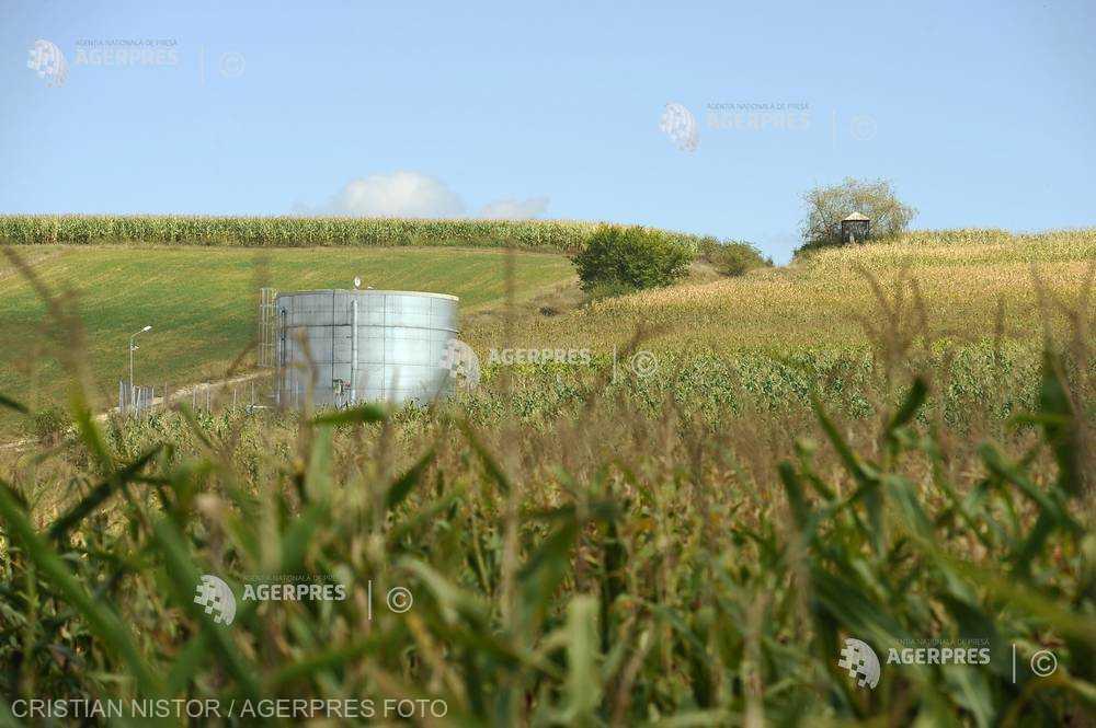 Vremea călduroasă este benefică pentru însămânţările de porumb în UE, dar riscă să afecteze producţia