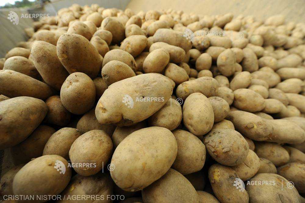 Cartofii s-au scumpit cu 21% de la începutul anului