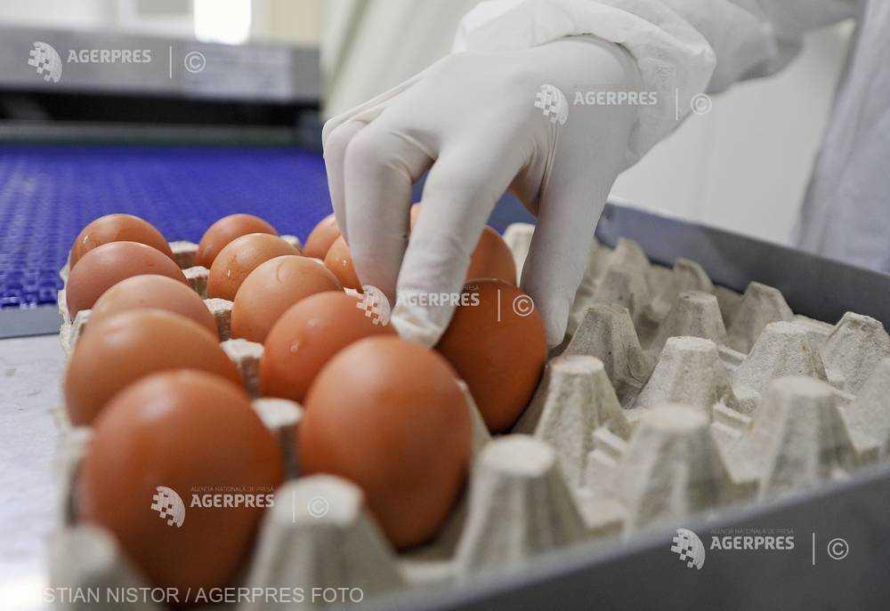 Preţurile la ouă, unt, fructe proaspete şi combustibili au crescut cel mai mult în decembrie 2017 (INS)