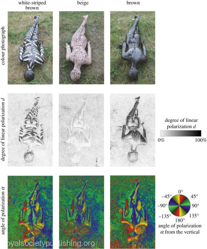 Dungile de vopsea aplicate pe corp ar putea proteja de atacurile unor insecte periculoase (studiu)