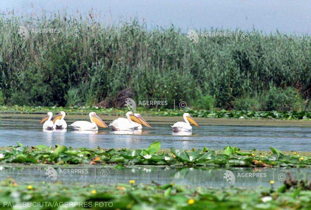 Delta Dunării, în atenţia unor touroperatori din SUA