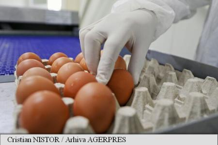 Scandalul ouălor contaminate: Intoxicația cu fipronil,